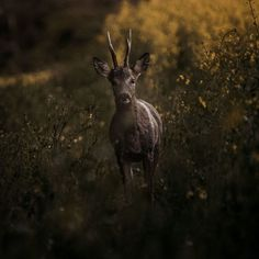 "206 curtidas, 1 comentários - Wild Life (@wild_nature_today) no Instagram: ""#wildanimals #wild #wildnature #nature #free #love #passion #power #share"""