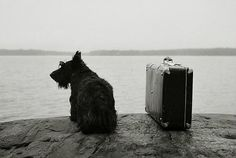 """hauntedbystorytelling: """" Kristoffer Albrecht :: Dog with Suitcase, 1982 more [+] by this photographer """" Black And White Dog, Berenice Abbott, Westies, Mans Best Friend, Black And White Photography, Monochrome Photography, Cute Animals, Thing 1, In This Moment"""