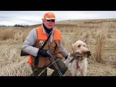 Pheasant Hunting with a Spinone Italiano [Outdoors]