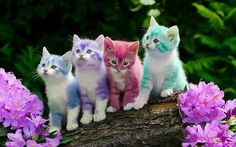 Colorful kitties... they look cute, because kittens are cute... I'm guessing a little bit of photo editing was involved.