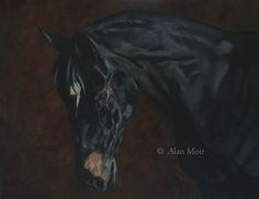 Alan Moir. Horse. Acrylic on canvas. www.facebook.com/alan.moir.portraits