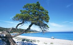 White sands of Saleccia Beach, near St Florent #Corsica #StFlorent #travel