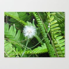 Make a wish Stretched Canvas by Amy Smith - $85.00