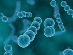 Flesh-Eating Bacteria: Fast Treatment Could Save Your Life - University Health News Flesh Eating Bacteria, Problem Solving Activities, Medical Surgical Nursing, Nclex Rn, Things Under A Microscope, Natural Health Tips, Medical Help, Microbiology, Science And Nature