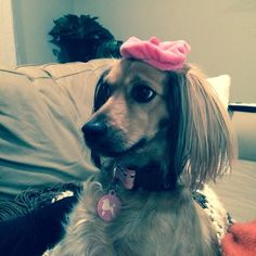 Do I look like a French Poodle now? #dog #cute #funny