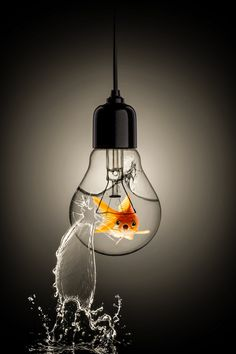 A photo edited with PicMonkey Glass Photography, Creative Photography, Apple Wallpaper, Wallpaper Iphone Cute, Light Bulb Art, Double Exposition, Background Pictures, Surreal Art, Belle Photo