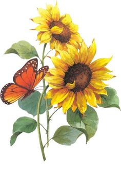 46 ideas for drawing flowers sunflower Sunflower Drawing, Watercolor Sunflower, Sunflower Art, Watercolor Flowers, Watercolor Paintings, Sunflower Paintings, Drawing Flowers, Sunflowers And Daisies, Sunflower Wallpaper