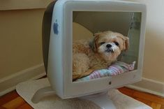 Most indoor dog houses/crates are, let's face it, pretty ugly. Below are some more creative ways of making a space for your pet without metal fencing taking a prime spot in your living room. Cute Dog Beds, Puppy Beds, Pet Beds, Cute Dogs, Puppy Room, Old Mac Computers, Wood Dog Crate, Alter Computer, Designer Dog Beds