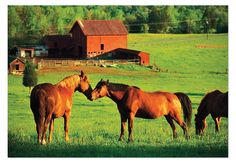 Melissa & Doug Kissing Horses with Barn Jigsaw Puzzle, 200-Piece [Toy]