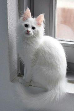 035b2b57a4 Beautiful White Cat  cat Hündchen Training