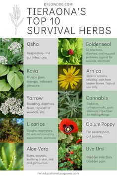 I was asked by an interviewer what 10 herbs I would take with me if I was stranded on a deserted island. Here are 10 herbs I chose to build a survival kit. Healing Herbs, Medicinal Plants, Natural Healing, Magic Herbs, Herbal Magic, Natural Health Remedies, Herbal Remedies, Herbs List, Herbs For Health