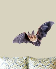 Autumn Decorations – Bat wall decal halloween wall decor Door decor – a unique product by decalcoman on DaWanda