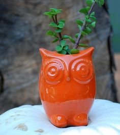 #owl planter by ramona