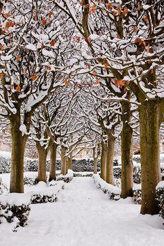 New Wonderful Photos: Snowy Avenue, Botanic Garden, Oxford, England Winter Photography, Nature Photography, Landscape Photography, Gray Garden, Oxford England, England Uk, Nature Sauvage, I Love Winter, Winter Magic