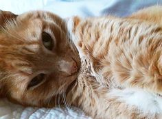 Sully is the cutest cat ever! He is a very sweet kitty and well worth voting for! Vote for us!
