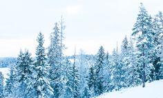by Ann-Kristina, skandinavia, snow, snowy, cold, winter, finland