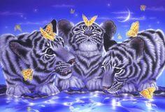"""Curiosity"" White Tigers    50.0 × 72.7cm, Acrylic on canvas, 2010  Gallery Bigcats2 - Art of Kentaro Nishino"