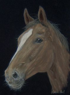 Horse in pastels on velour