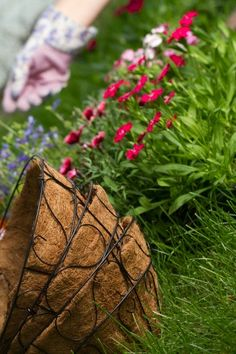 The Ultimate Guide to Hanging Baskets | Greener on the Inside