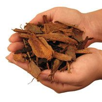 Anti-Aging Benefits of Pine Bark Extract