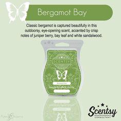 Bergamot Bay  #scentsy  Nikkilynnh.scentsy.us