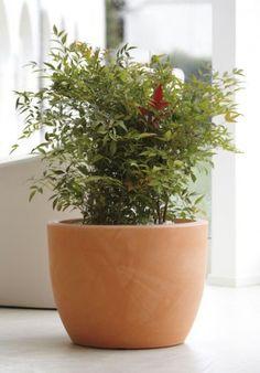 """Flowerpot - """"Hera"""" BUY IT NOW ON www.dezzy.it!"""