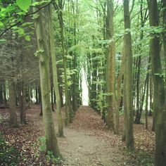 Forest in Tidworth just as you come in to it from Salisbury plain