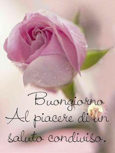 Christian Birthday Greetings, Image Jesus, Happy Birthday Flower, Morning Blessings, Special Words, Romantic Flowers, Good Morning Greetings, Sweetest Day, Happy Weekend