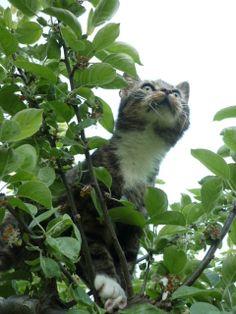 Kattflicka Strumpan i äppelträdet