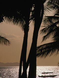Tropical Island Paradise, Fiji, Pacific