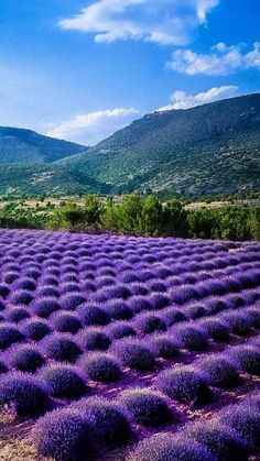 TURKEY Lavender Blue, Lavender Fields, Lavender Flowers, Purple Flowers, Lavander, Beautiful World, Beautiful Gardens, Beautiful Flowers, Beautiful Places