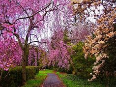 Reynolda Gardens... haven't been there yet, but its on my list of things to see in Winston!