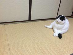 【画像】 うちの猫の座り方wwwww - ゴールデンタイムズ