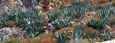 Aloe čistí, brání, detoxikuje, omlazuje naši kůži - Energie života