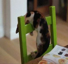 Not The Smartest Cat Ever