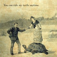 I want a turtle. No one understands why. I understand.
