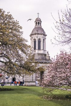 Dublin is a great city to explore during the springtime when the days are longer. Best seen in April or May, you can't go wrong to dedicating at least a few days to uncovering the rich history of the Irish capital. Here's a quick guide to where to find the very best magnolia trees and cherry blossom in Dublin!