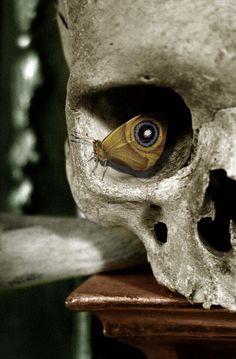 Amazing photo of a skull