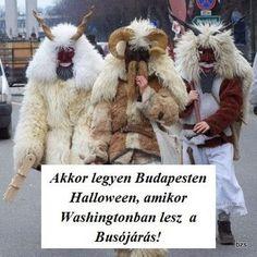 Humor - evera911 - Picasa Webalbumok 1, Teddy Bear, Study, Album, Humor, Halloween, Funny, Quotes, Animals