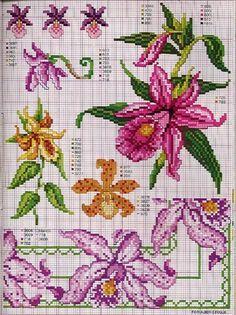 Gallery.ru / Фото #87 - Ботаника-цветы - irislena