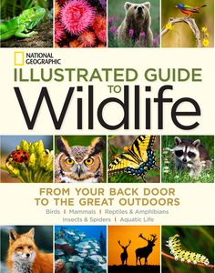 From one of the most trusted names in field guides comes a new and lavishly illustrated guide to identifying North America's most common birds, mammals, insects, reptiles, and amphibians, plus fish and other aquatic creatures. National Geographic Illustrated Guide To Wildlife | National Geographic Store
