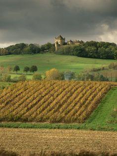 vignobles, Lons-le-Saunier, Franche-Comté