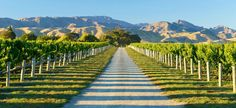 Marlborough Wine Tours (Blenheim, New Zealand): Address, Phone Number, Attraction Reviews - TripAdvisor