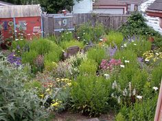 Yarrow, catmint, Shasta daisy, rose campion and other deer resistant and tough plants in authors yard. Lovely and bee friendly MXS