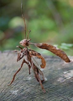 A Stick Mantis by Lisa Perrine, not real, but they do look like this, sort of