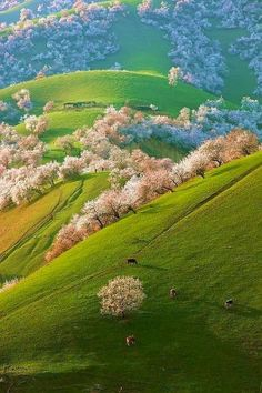 Spring, Shinjang, China