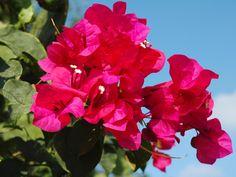 Sumptuous Tropical Flowers   DIY Garden Projects   Vegetable ...
