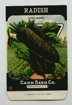 Antique Card Seed Company  Radish