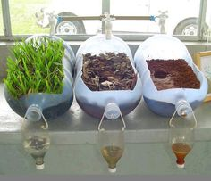 A great example to illustrate soil erosion. This simple experiment shows the importance of trees as part of our environment. The water flowing through soil, vegetation (far left), exits clear, and the other two without vegetation is muddy. Why keep cutting trees in our forests and complaining about the water in our rivers are so muddy and dirty?