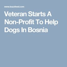 Veteran Starts A Non-Profit To Help Dogs In Bosnia
